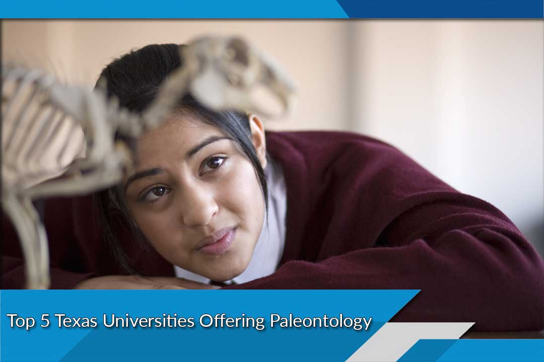 Top 5 Texas Universities Offering Paleontology